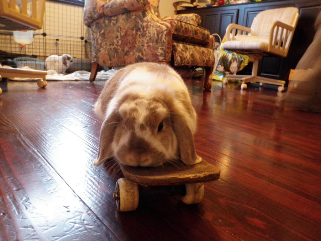 Bunnies enjoy skateboarding.
